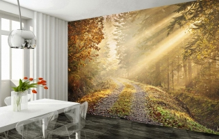 tranquil-forest-path-giant-wall-mural-forest-002-free-paste-3945-p